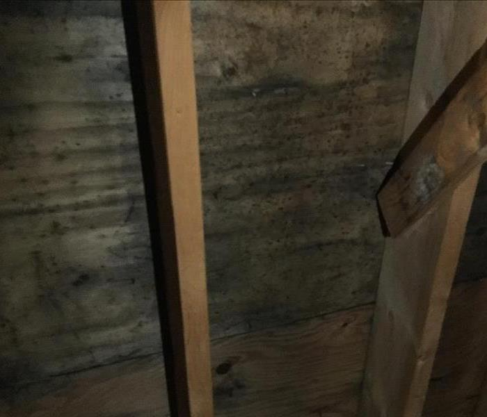 Storing Clothes in Attic, Homeowner Discovers Mold Before